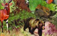 Alfred Brehm-Az állatok világa 5